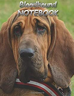 Bloodhound NOTEBOOK: notebooks and journals 110 pages (8.5