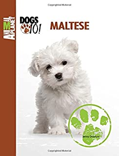 Best maltese dogs 101 Reviews