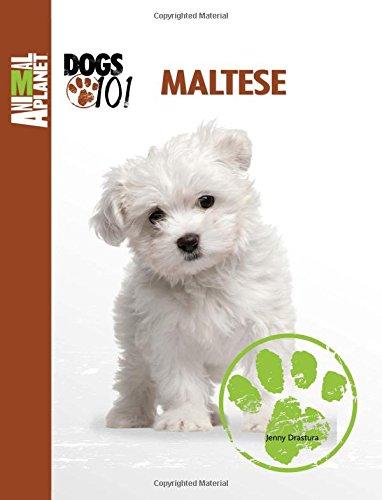 Top maltese dog books for 2020