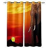 ZSDFPW Cortinas Opacas Naranja Rojo Gris Puesta de Sol Animal Elefante Cortinas Térmicas Aislantes Poliéster Cortinas de impresión para Oficina Cuarto Decorativa Reducción de Ruido 75x166cm x2