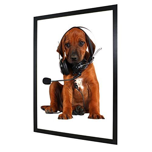 Fotolijst 50x75 cm zwart decoratie lijst zonder afbeelding 13x18 30x40 50x70 of A4 A3 fotolijst wissellijst van hout meerdere kleuren selecteerbaar fotolijst voor foto of fotos Galeria53 lijst