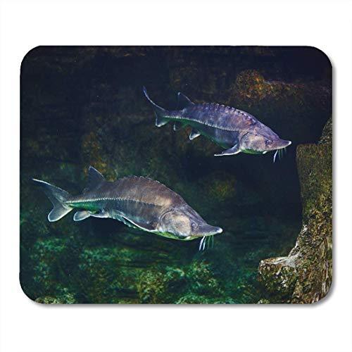 Mauspads Fisch Grün Atlantik Lebendig Stör im Aquarium Weiß Beluga Mauspad für Notebooks, Desktop-Computer Matten Büromaterial