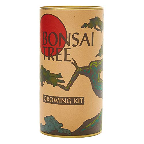 Bonsai Tree   Ginkgo Tree   Seed Grow Kit   The Jonsteen Company