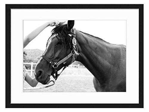 Wood Framed Canvas Artwork Home Decore Wall Art (Black White 20x14 inch) - Horse Trim Comb Horse Brushing A Horse Brown Hors