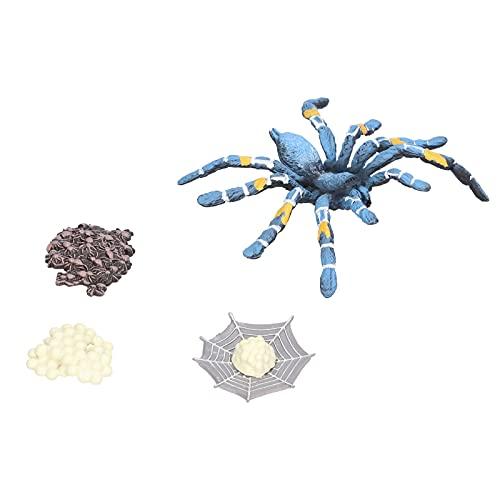 xiji Wachstumszyklusmodell, wissenschaftliches pädagogisches Spielzeug Spinne Lebenszyklusstadien Zahlen Spinnenwachstumszyklus für die Schule für zu Hause