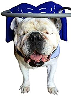 Muffin's Halo Blind Dog Harness Guide Device – Help for Blind Dogs or Visually Impaired Pets to Avoid Accidents & Build Confidence – Ideal Blind Dog Accessory to Navigate Surroundings – Blue- Medium