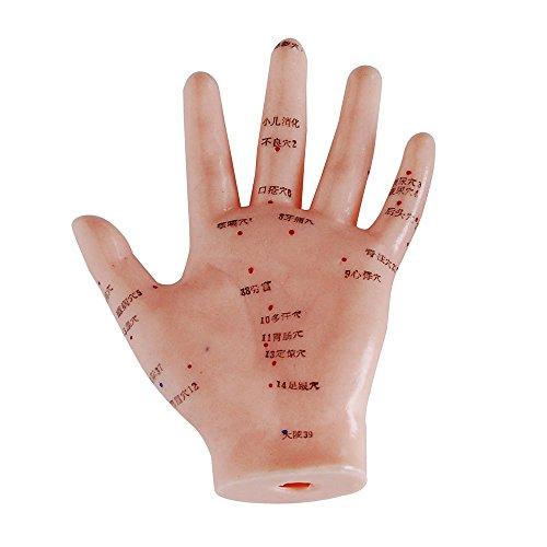66fit Akupunkturmodell der Hand – 13 cm – Druckpunkte und Meridiane