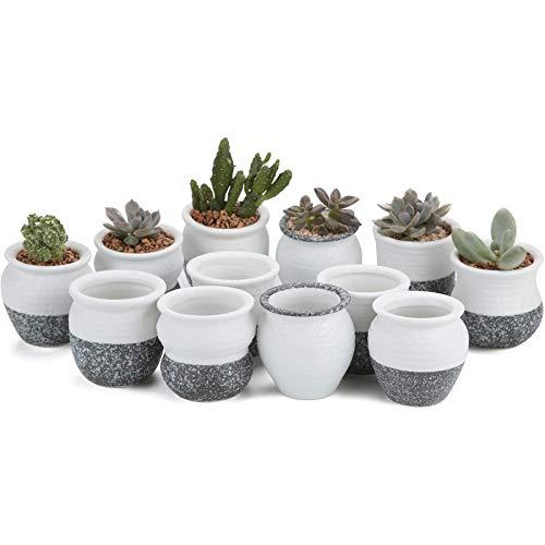 T4U 5,7cm ceramica mini Korea Style Snow Serial No. 1succulente vaso per fiori cactus vaso per piante da vaso contenitore
