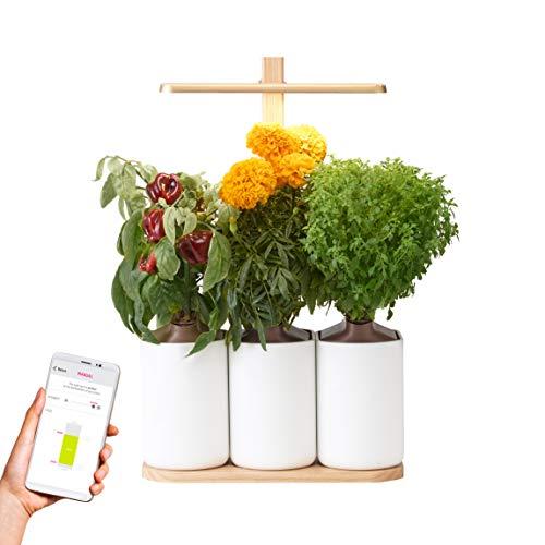 Lilo Edition, el huerto de interior para los amantes del diseño - 5 cápsulas de plantas incluidas: albahaca verde fina, mini pimientos, rosa de la India, pimpollos y arándanos