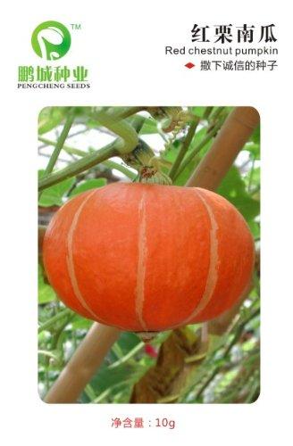 Fruits et légumes graines châtaignier rouge graines de citrouille Goût emballage douce couleur 10 g doux et savoureux