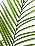 artplants.de Set 2 x Deko Großblatt Arecapalme, 165cm, wetterfest - Kunstpalme - Künstliche Areca Palme - 2