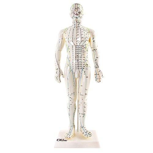 66Fit - Modelo Humano de acupuntura, Masculino, 50cm, Ayuda a la enseñanza de la formación médica.