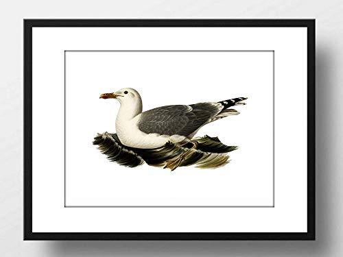 Din A4 Kunstdruck ungerahmt - Möwe Seemöwe Vogel Natur Vintage Maritim Badezimmer Druck Poster Bild