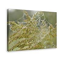 天然植物ポスタークモの巣と花1キャンバスポスター壁アートの装飾家族の寝室の装飾フレームの印刷額縁:24×36インチ(60×90cm)
