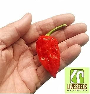 dorset naga pepper seeds