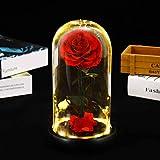 永遠の花バラはランプ実魅惑のローズガラスのドーム、フォーエバープリザーブドローズフラワーナイトライトボトル 結婚式 発表会 誕生日 記念日 成人式