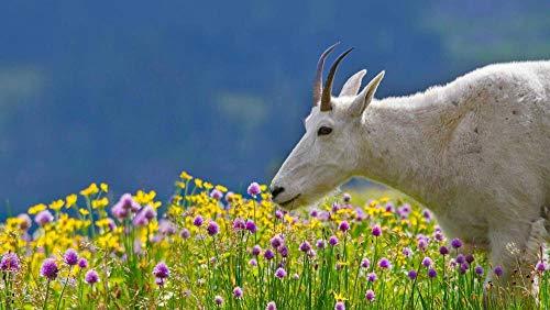 YDANH Beautiful View 1000 Rompecabezas para Adultos Juego de diversión de descompresión de Madera Grande Regalo Decorativo —Pintar el Cielo — Una Cabra montés en el Parque Nacional Glacier