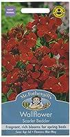 【輸入種子】 Mr.Fothergill's Seeds Wallflower Scarlet Bedder ウォールフラワー スカーレット・ベッダー ミスター・フォザーギルズシード
