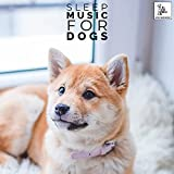 Dog Toys That Play Music