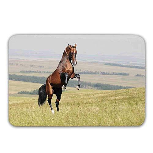 Tapis d'entrée en caoutchouc antidérapant pour chevaux, étalon de cheval Bay Akhal Teke élevage sur le terrain Paillasson pastoral pour mammifères nobles en plein air pour tapis de bain pour porte d'e