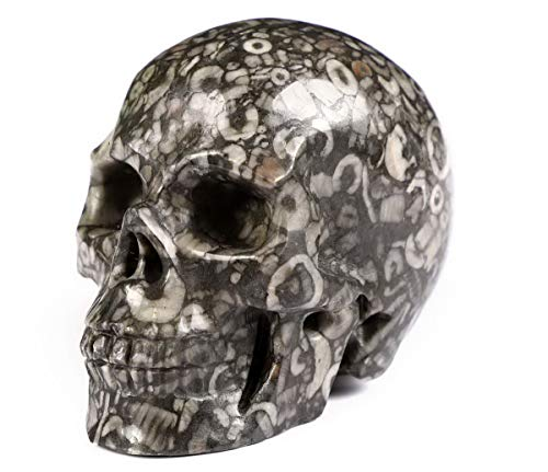 Skullis 2.0' Crinoid Fossil Crystal Skull, Hand Carved Gemstone Fine Art Sculpture, Reiki Healing Stone Statue.