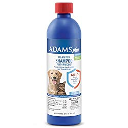 guide to shampooing a dog