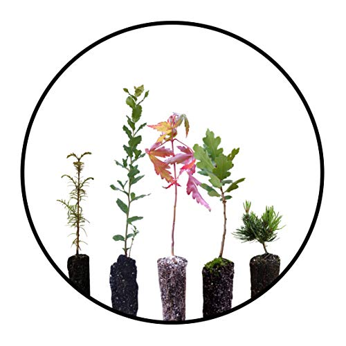 Bonsai Tree Bundle | Collection of 5 Live Tree Seedlings | The Jonsteen Company