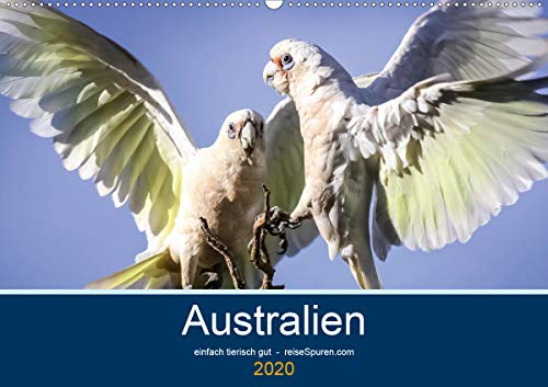 Australien - einfach tierisch gut (Wandkalender 2020 DIN A2 quer): Tierwelt in Australien - einfach einzigartig! (Monatskalender, 14 Seiten ) (CALVENDO Tiere)