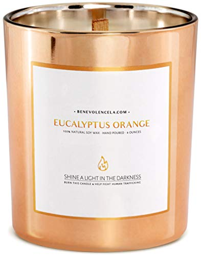 Premium Eucalyptus & Orange Scented Candles, Highly Scented Eucalyptus Candle, All Natural Soy Candles Scented, 8 oz | 45 Hour Burn Soy Candle, Calming Aromatherapy Candles in Rose Gold Glass Jar