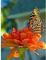 DIY 5Dダイヤモンド塗装キットは、家の装飾の花や蝶のための大人と初心者のダイヤモンド塗装キットに番号が付けられています
