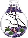 Ecosides Marimo - Juego de terrario de bola de musgo, terrario zen, terrario de cristal en forma de lágrima (morado)