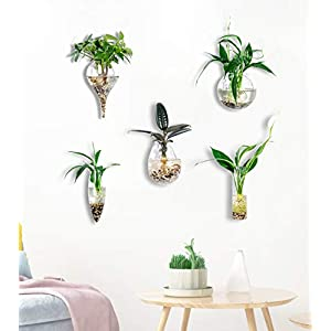 KNIKGLASS Pack of 5 Glass Planters Wall Hanging Planters Round Glass Plant Pots Hanging Air Plant Pots Flower Vase Air Plant Terrariums Wall Hanging Plant Container,