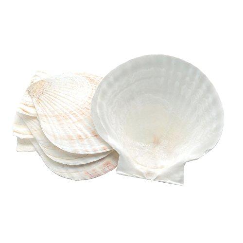 Nantucket Seafood Natural Baking Sea Shells, sizes may vary from 4.5' - 5', Set of 4