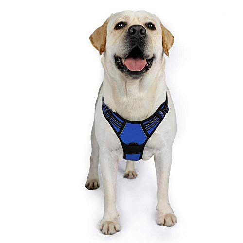 rabbitgoo No-Pull Hundegeschirr für große Hunde Welpengeschirr Einstellbar Weich Geschirr Sicher Kontrolle Brustgeschirr Gepolstert Dog Harness Blau XL