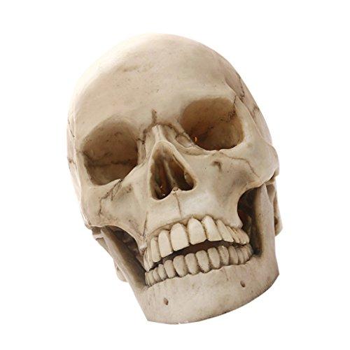 MagiDeal Lifesize 1: 1 Realista Cráneo Humano Réplica Modelo de Resina Apoyo Médico Artesanía - 21 * 13 * 6 cm
