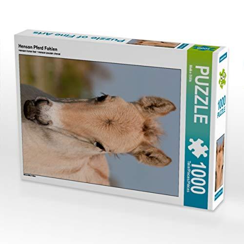 CALVENDO Puzzle Henson Pferd Fohlen 1000 Teile Lege-Größe 48 x 64 cm Foto-Puzzle Bild von Meike Bölts