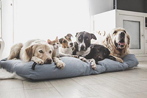 51 Degrees North Cuscino per Cani Grandi e piccoli cani e gatti, Blu, Breeze Blue, letto per cani lavabile cotone, Medium, Extra Large, M, XL