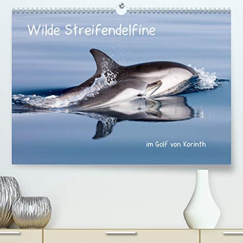 Wilde Streifendelfine im Golf von Korinth (Premium, hochwertiger DIN A2 Wandkalender 2021, Kunstdruck in Hochglanz)