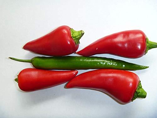 SANHOC Samen-Paket: Cayenne Chili-Pfeffer seedsSEED