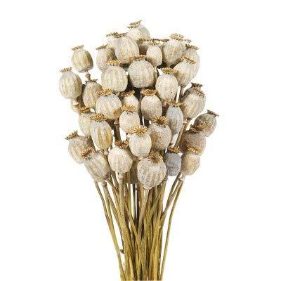 Flores Frescas Online Papaver Natural Seco 2 Ramos Portes Gratis