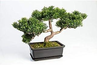 artplants.de Bonsái de Cedro Artificial con 120 Ramas en Cuenco Decorativo 25cm - Bonsái Decorativo - Bonsai Artificial