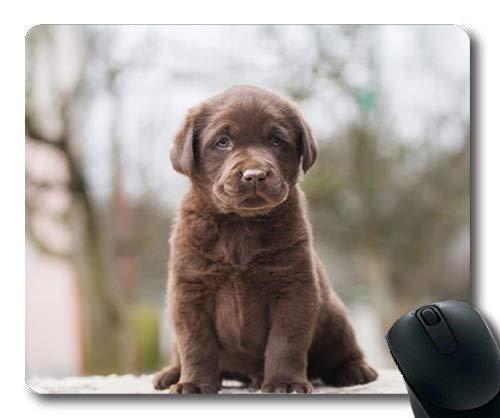 Yanteng Alfombrilla de ratón para Juegos, Perros Mascotas