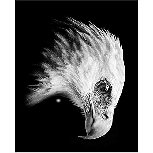 Diamond Painting para el Hogar Decoración de la Pared para Adultos y niños Cabeza De Águila Animal Blanco Y Negro Rhinestone Bordado DIY 5D Taladro Completo Kit,Taladro Cuadrado,60X75cm