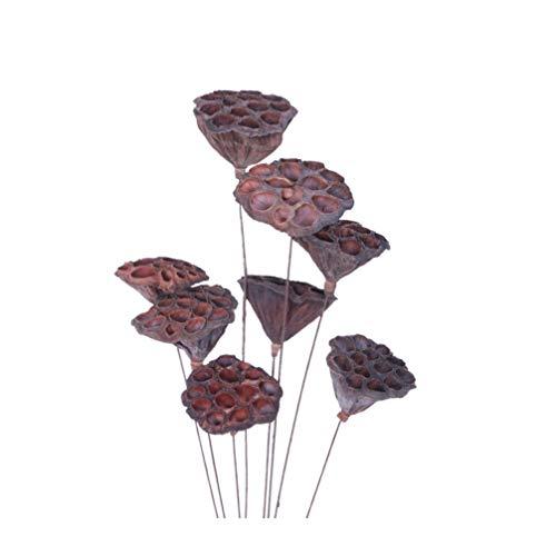Vosarea 8 Stück natürliche getrocknete Blumen Lotus Hülsen stammt Samen Pflanzen für Zuhause Ornament getrocknet