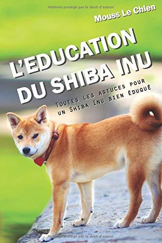 Photo de leducation-du-shiba-inu-toutes-les-astuces-pour-un