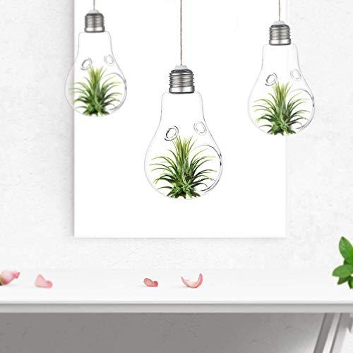 KnikGlass 3 x hängende Glasvase, Glühbirnen-Glas Terrarium, Luft Pflanzentopf Hydroponic Container Pflanzgefäß für Innen- und Büroinnendekor (mit 2 Löchern)