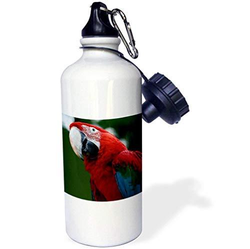 Macaw Ara Chloropterus snavel vogel veren groene Macaw groene gevleugelde Macaw witte grappige roestvrij staal sport waterfles voor vrouwen mannen kinderen 21oz