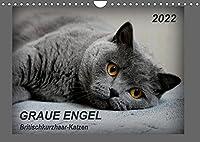 GRAUE ENGEL Britischkurzhaar-Katzen (Wandkalender 2022 DIN A4 quer): Traumhafte Portraetfotos von Britischkurzhaar-Katzen (Monatskalender, 14 Seiten )