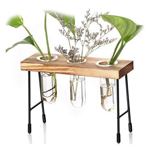 Takefuns Maceta de cristal transparente con forma de tubo para bonsái, maceta hidropónica, terrario con soporte de madera, retro, para escritorio,17 x 6 x 11 cm