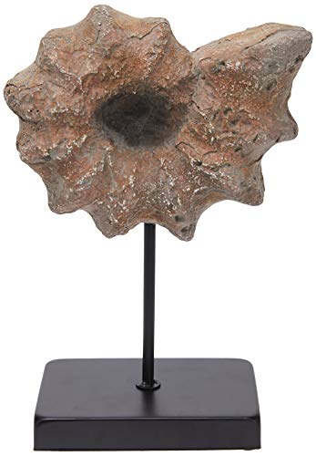 Better & Best Fósil de caracola Grande con peana, Color Rojizo y Negro, Resina/Metal, Topo, 20.00x10.00x30.00 cm